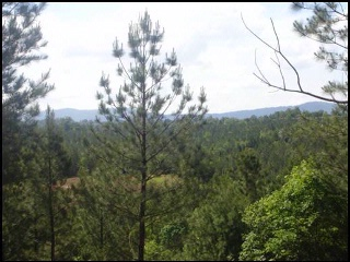 View from The Settings Lot 161 for $110,000